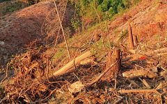 Clearcut at SDH road