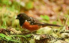 A bird on the forest floor