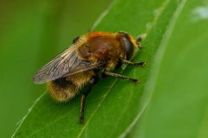 bee on a leaf