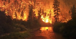 two deer in a river silhouetted against a burning forest